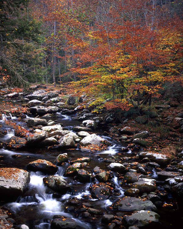 Mountain Art Print featuring the photograph Mountain Leaves In Stream by George Ferrell