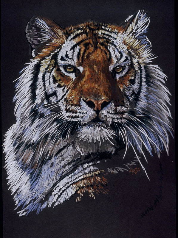 Tiger Art Print featuring the drawing Nakita by Barbara Keith