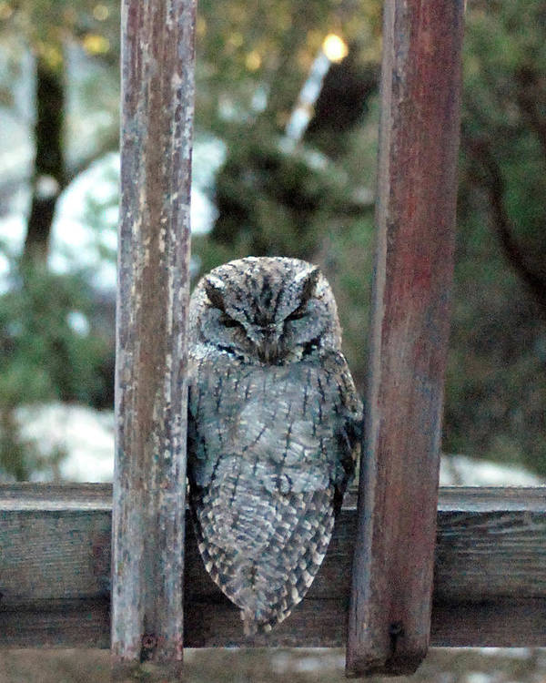 Owl Art Print featuring the photograph Owl On Deck by JOANNE McCubrey