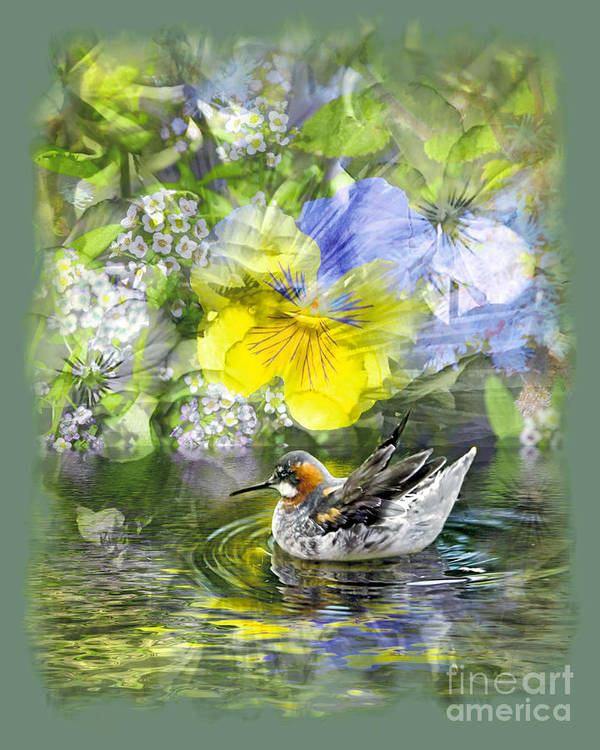 Floral Art Print featuring the photograph Pintail Pond by Chuck Brittenham