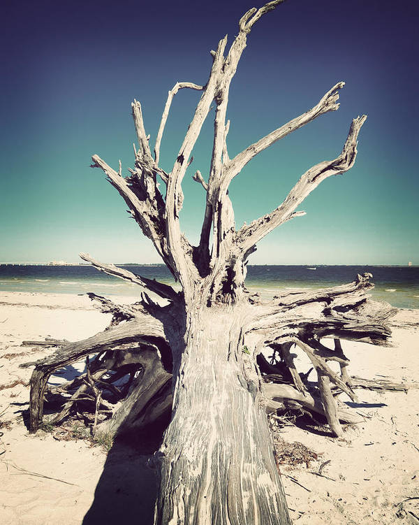 Florida Art Print featuring the photograph Roots To The Sky-vintage by Chris Andruskiewicz
