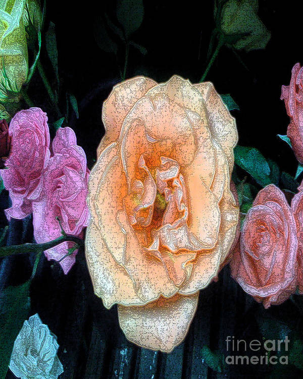 Roses Art Print featuring the photograph Roses by David Carter
