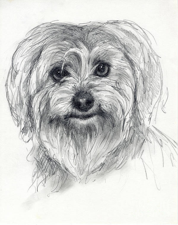 Dog Art Print featuring the drawing Rosie by Tim Thorpe