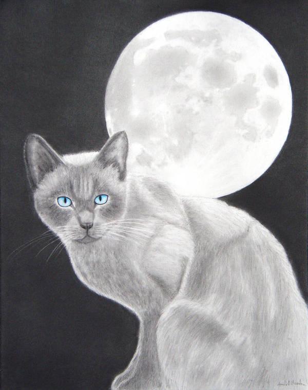 Cat Art Print featuring the drawing Sasha by Nicole I Hamilton