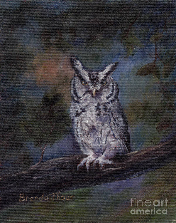 Owl Art Print featuring the painting Screech Owl by Brenda Thour