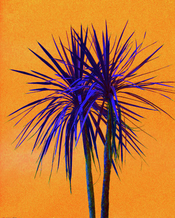 Palm Art Print featuring the photograph Silhouette On Orange by Margaret Saheed