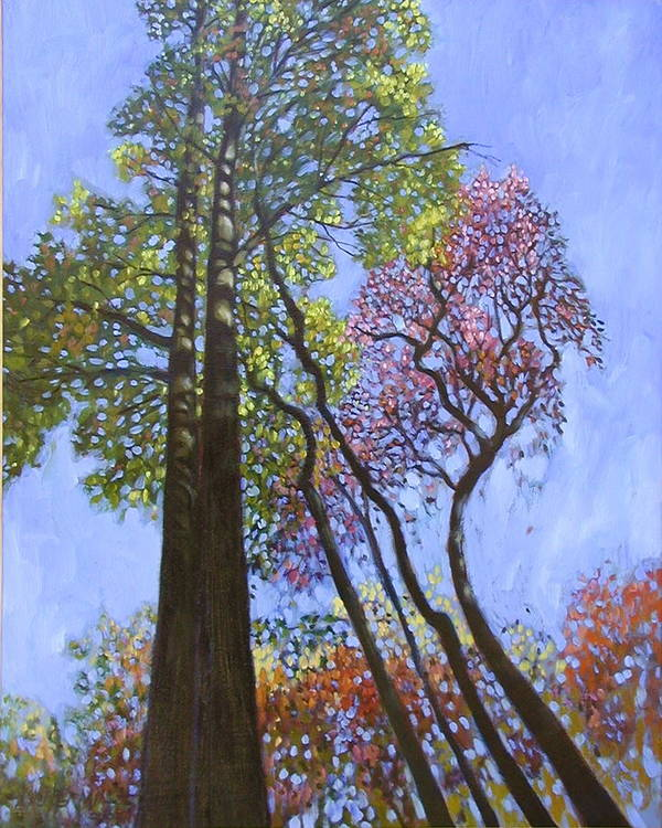 Fall Trees Highlighted By The Sun Art Print featuring the painting Sunlight On Upper Branches by John Lautermilch