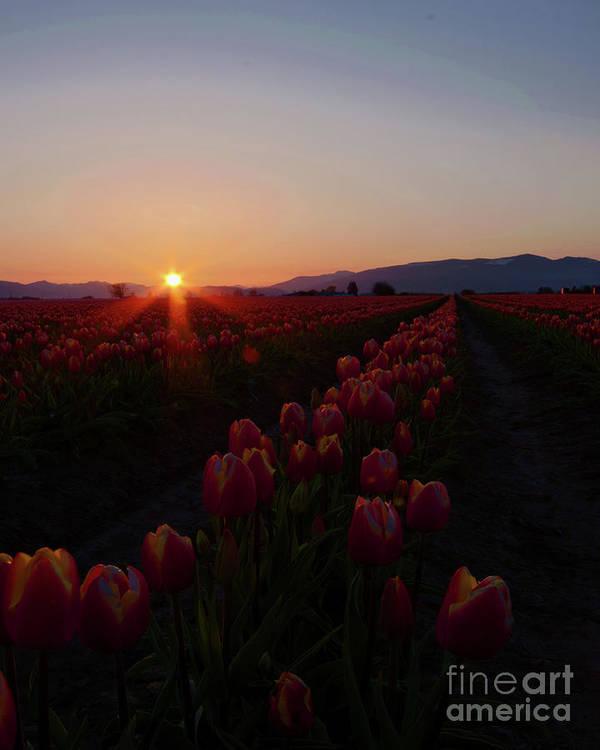 Sunrise Art Print featuring the photograph Sunstar by Nichole Peterson