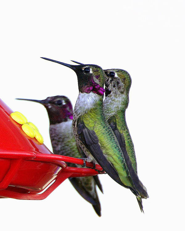 Birds Art Print featuring the photograph The Breakfast Cub II by Lynn Andrews