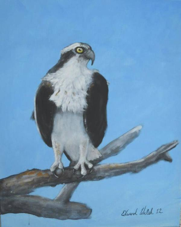 Osprey Art Print featuring the painting The Lookout by Edward Walsh