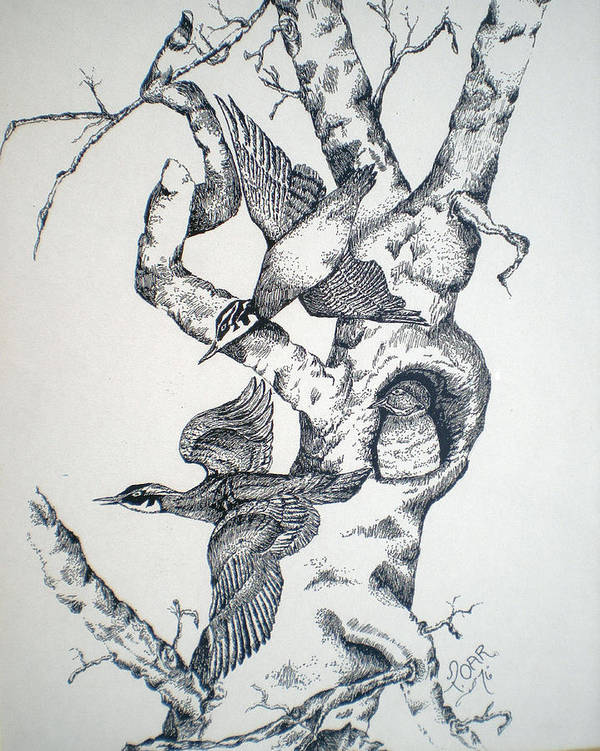 Nature Art Print featuring the drawing Tree And Birds by Tammera Malicki-Wong