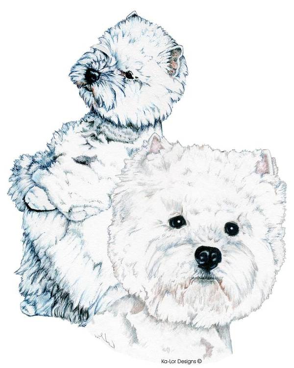 West Highland White Terrier Art Print featuring the drawing West Highland White Terriers by Kathleen Sepulveda