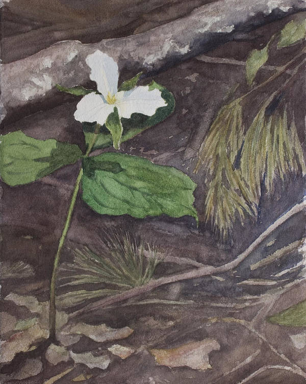 White Trillium Art Print featuring the painting White Trillium by Debbie Homewood