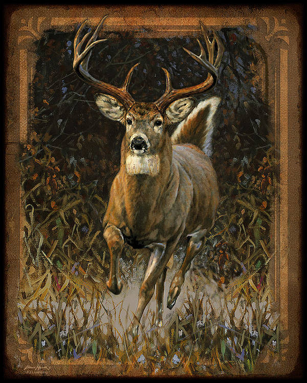 Bruce Miller Art Print featuring the painting Whitetail Deer by JQ Licensing
