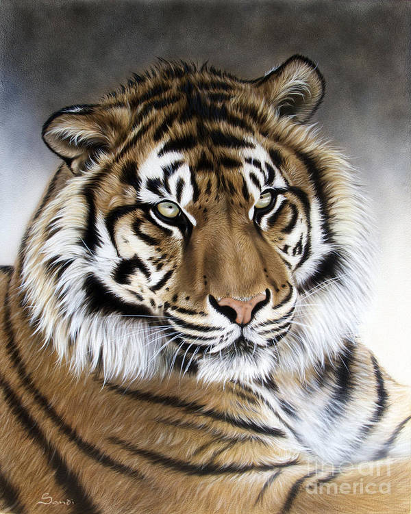 Tiger Art Print featuring the painting ZEN by Sandi Baker