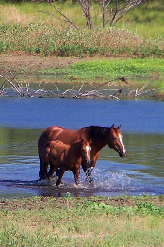 Horses Art Print featuring the photograph Okay time to go. by Lilly King