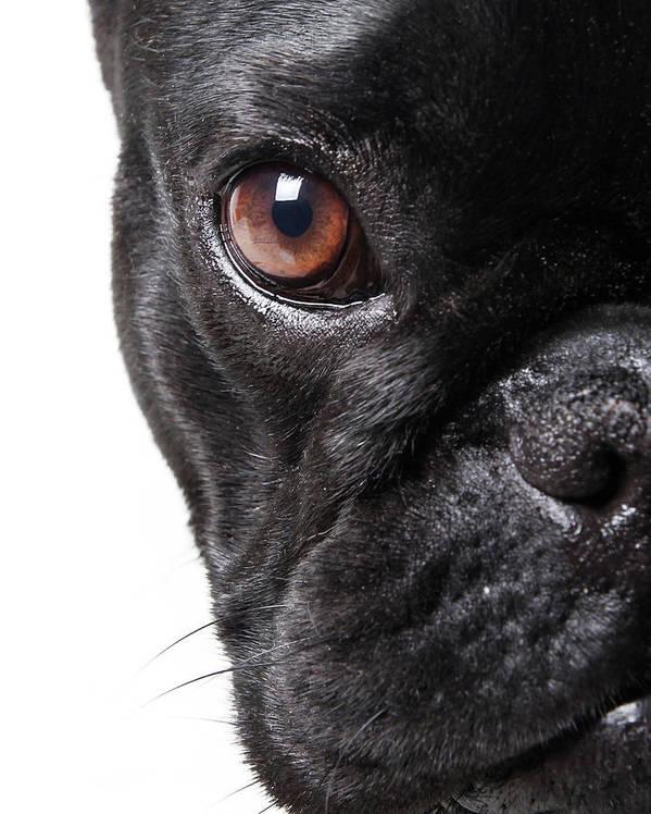 Pets Art Print featuring the photograph French Bulldog by Retales Botijero