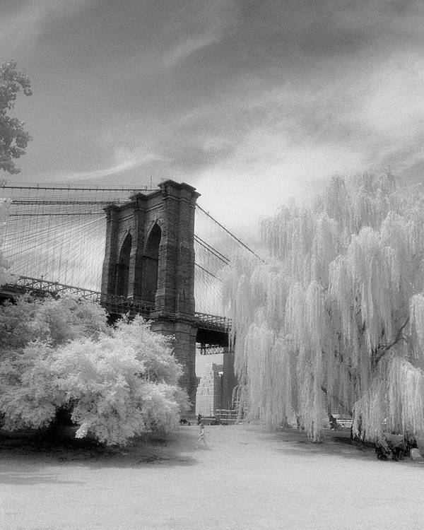 New York Photographs Art Print featuring the photograph Brooklyn Bridge Willows by Dave Beckerman