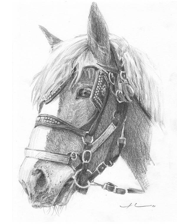 <a Href=http://miketheuer.com Target =_blank>www.miketheuer.com</a> Clydesdale Horse Pencil_portrait Art Print featuring the drawing Clydesdale Horse Pencil_portrait by Mike Theuer