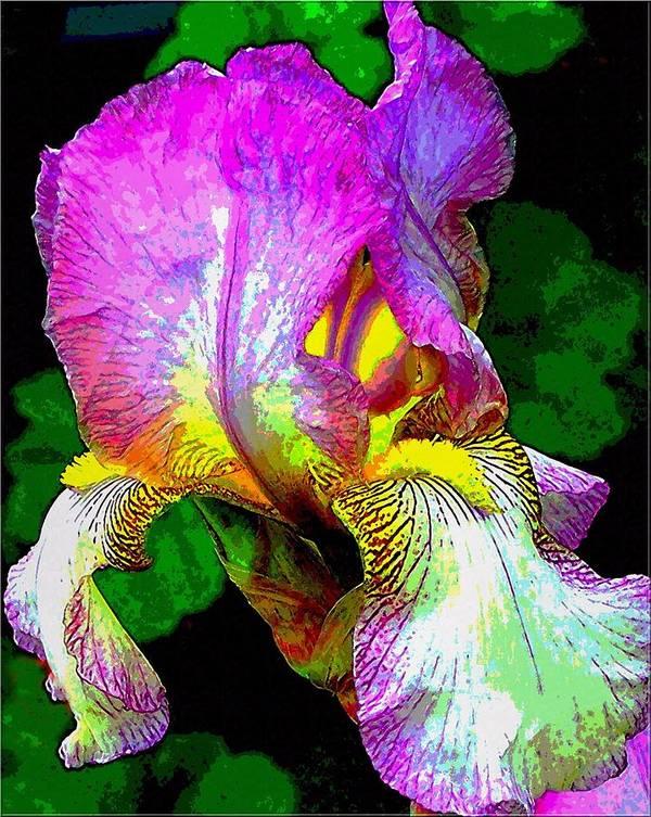 Flower Art Print featuring the photograph Iris Flashy Splash of Color by Dina Sierra