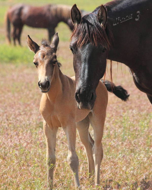 Horse Art Print featuring the photograph Mother's Love by Gene Praag