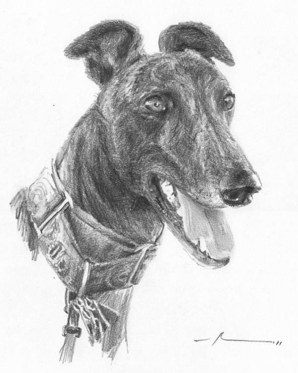 <a Href=http://miketheuer.com Target =_blank>www.miketheuer.com</a> Smiling Greyhound Pencil Portrait Art Print featuring the drawing Smiling Greyhound Pencil Portrait by Mike Theuer