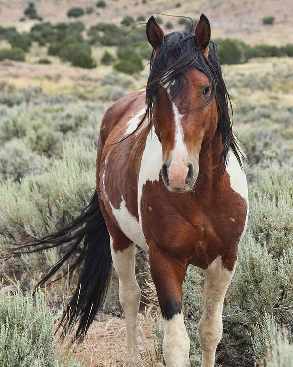 Horse Art Print featuring the photograph The Stallion by Gene Praag