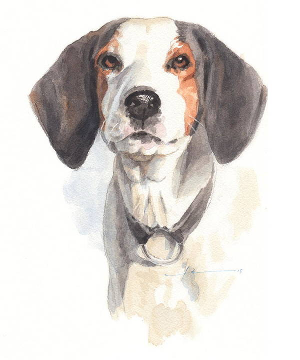 <a Href=http://miketheuer.com Target =_blank>www.miketheuer.com</a> Treeing Walker Coonhound Art Print featuring the drawing Treeing Walker Coonhound by Mike Theuer