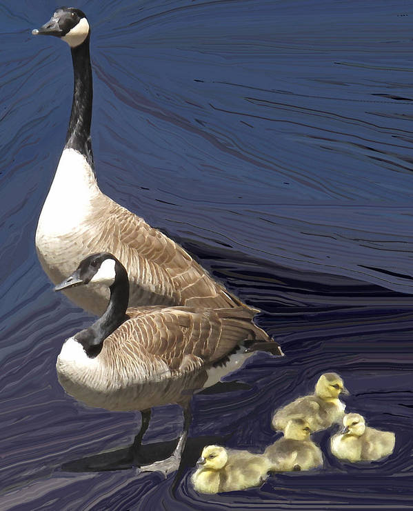Canada Goose Art Print featuring the photograph Posed Family Portrait by Ian MacDonald
