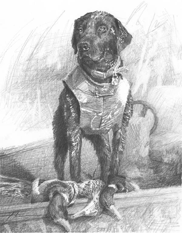 <a Href=http://miketheuer.com Target =_blank>www.miketheuer.com</a> Black Labrador Duck Hunting Pencil Portrait Art Print featuring the drawing Black Labrador Duck Hunting Pencil Portrait by Mike Theuer