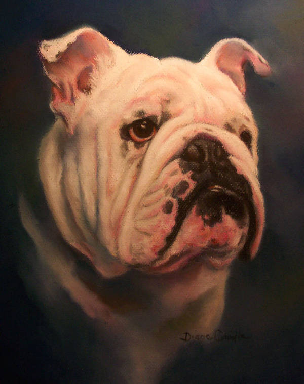 English Bull Dog Art Print featuring the painting Caesar by Diane Caudle