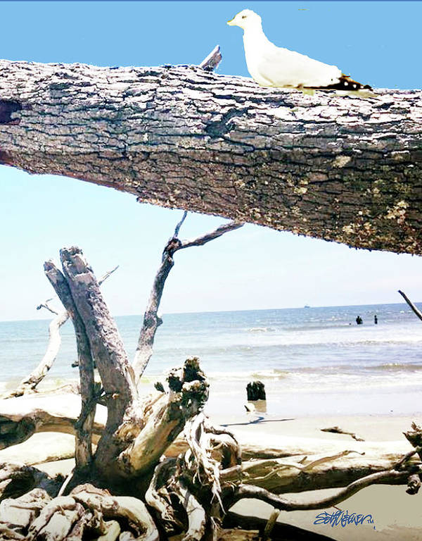 Daydreams And Driftwood Art Print featuring the photograph Daydreams and Driftwood by Seth Weaver