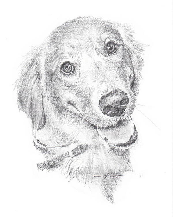 Www.miketheuer.com Art Print featuring the drawing Golden Retriever by Mike Theuer