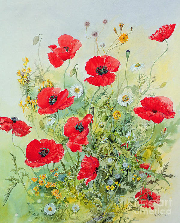 Flowers; Botanical; Flower; Poppies; Mayweed; Leaf; Leafs; Leafy; Flower; Red Flower; White Flower; Yellow Flower; Poppie; Mayweeds Art Print featuring the painting Poppies and Mayweed by John Gubbins