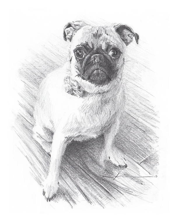 Www.miketheuer.com Posing Pug Pencil Portrait Art Print featuring the drawing Posing Pug by Mike Theuer