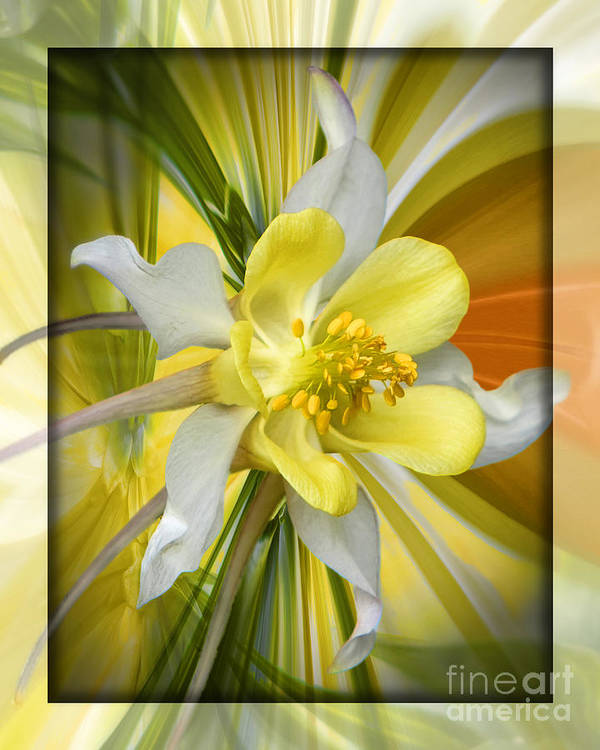Flower Art Print featuring the digital art Prom Night by Chuck Brittenham