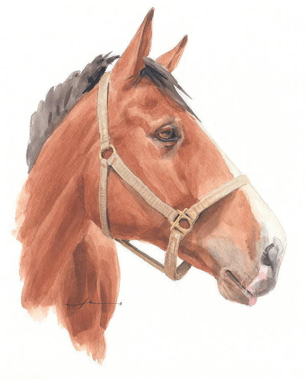 <a Href=http://miketheuer.com Target =_blank>www.miketheuer.com</a> Quarter Horse Face Watercolor Portrait Art Print featuring the drawing Quarter Horse Face Watercolor Portrait by Mike Theuer