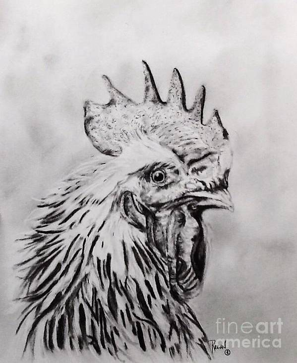 Rooster Art Print featuring the drawing Rooster by Regan J Smith