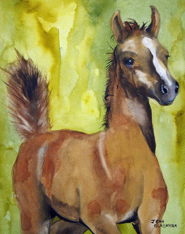 Filly Art Print featuring the painting Saucy by Jean Blackmer