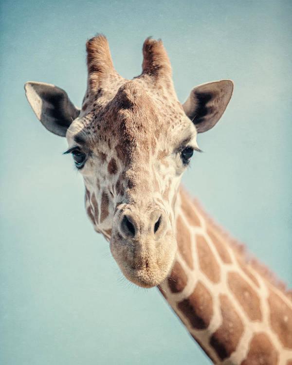 Giraffe Art Print featuring the photograph The Baby Giraffe by Lisa R