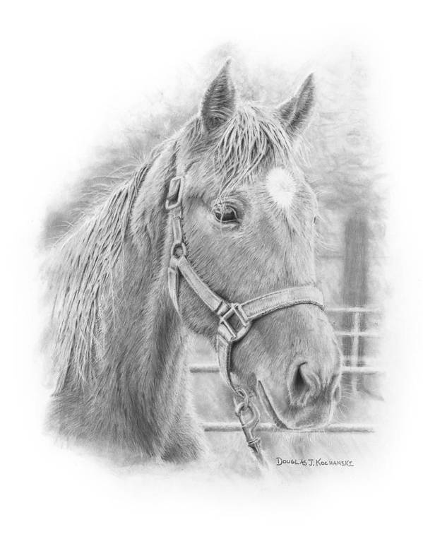 Horse Realistic Drawing Rendering Graphite Pencil Animal Western Art Print featuring the drawing Whistler by Douglas Kochanski