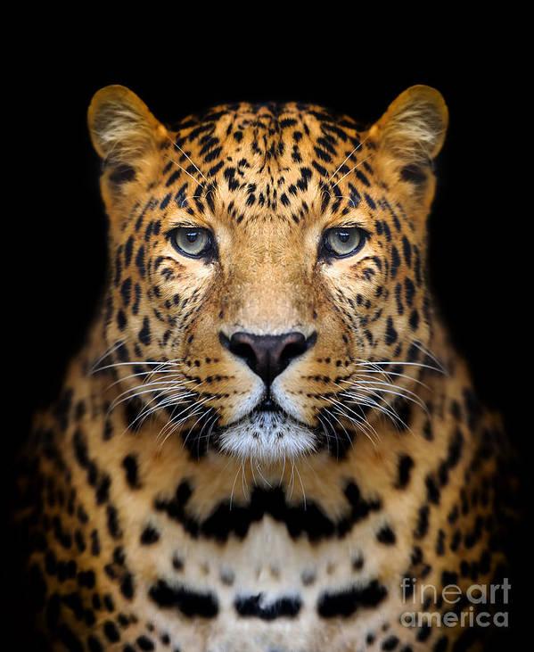 Big Art Print featuring the photograph Close-up Leopard Portrait On Dark by Volodymyr Burdiak