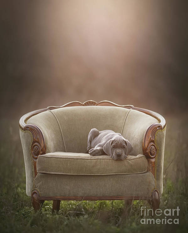 Sofa Art Print featuring the photograph Floyd by Mike Bons