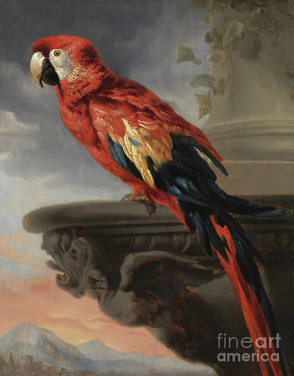 Rubens Art Print featuring the painting Parrot By Rubens by Rubens