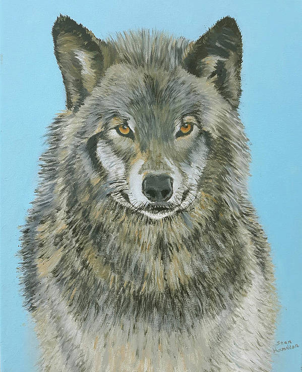 Timber Wolf Art Print featuring the painting Timber Wolf 4 by Stan Hamilton