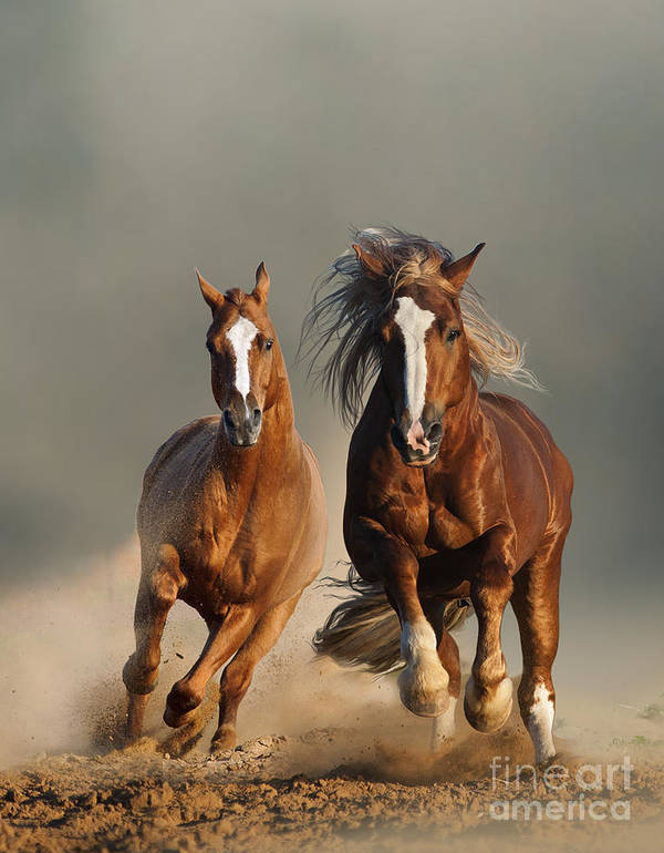 Prairies Art Print featuring the photograph Two Wild Chestnut Horses Running by Mariait