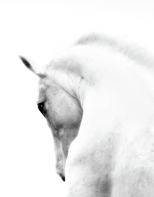 Horse Art Print featuring the photograph White Stallion Andalusian Horse Neck by 66north