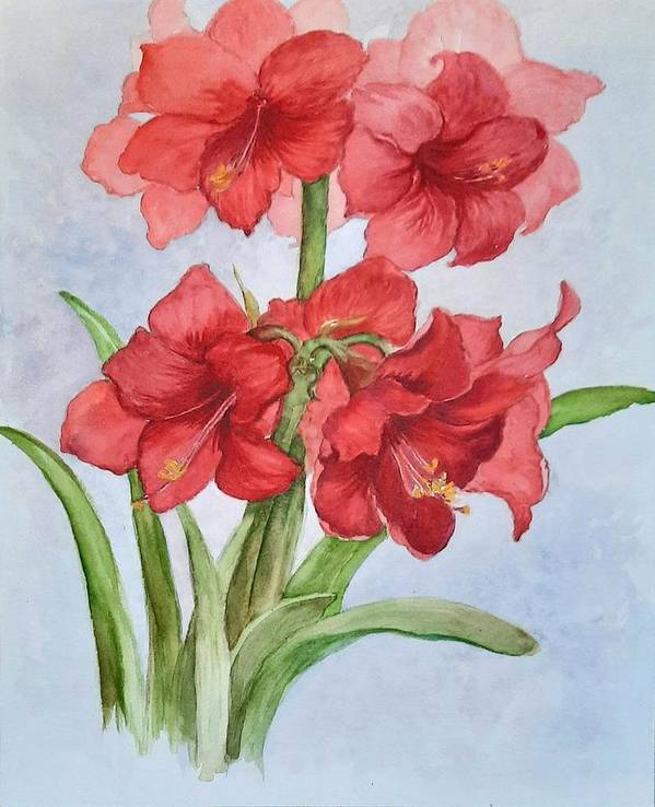 Flowers Art Print featuring the painting Christmas Amaryllis by Lois Mountz