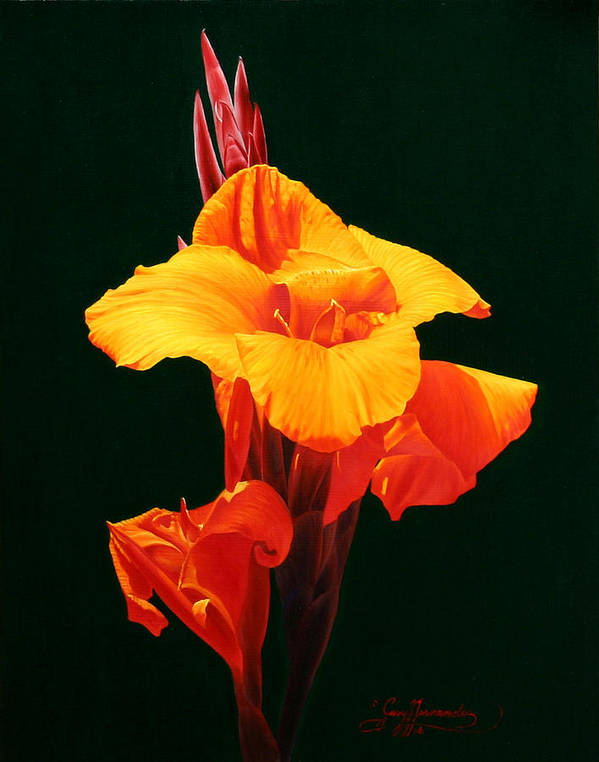 Floral Art Print featuring the painting Orange Canna by Gary Hernandez