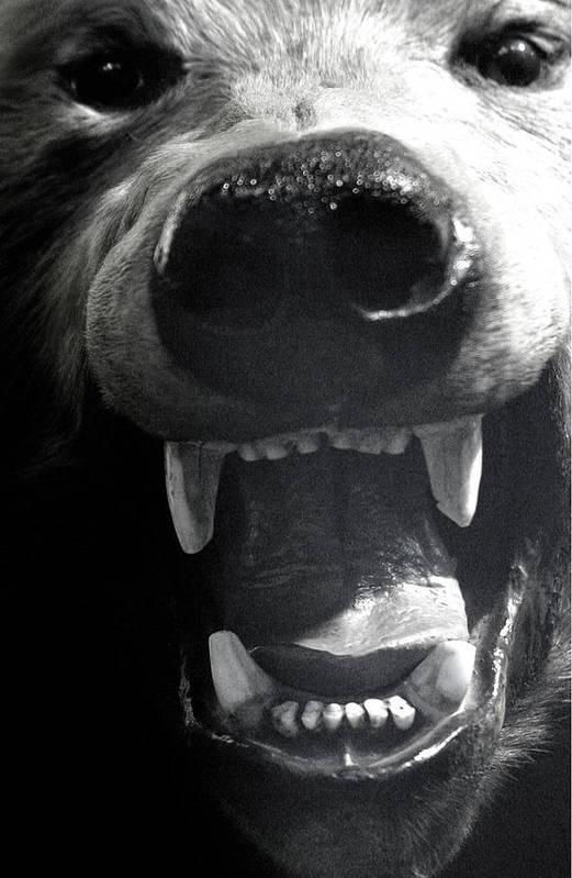 Jez C Self Art Print featuring the photograph Beared Teeth by Jez C Self